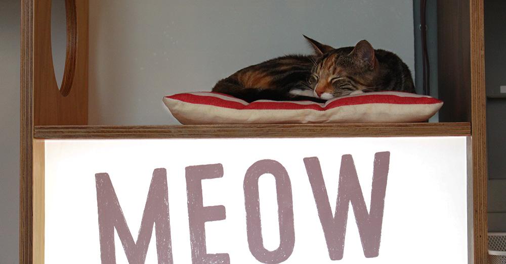 Bild zeigt eine Katze