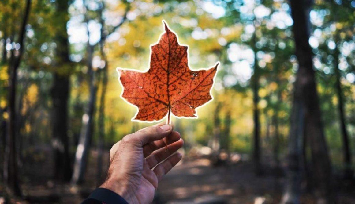 Kanada Fakten Ahornblatt in der Hand