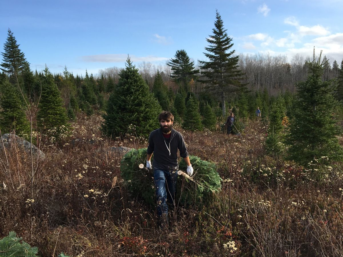 Auslandsaufenthaltes in Kanada Verrückt sein Weihnachtsbaum Farm