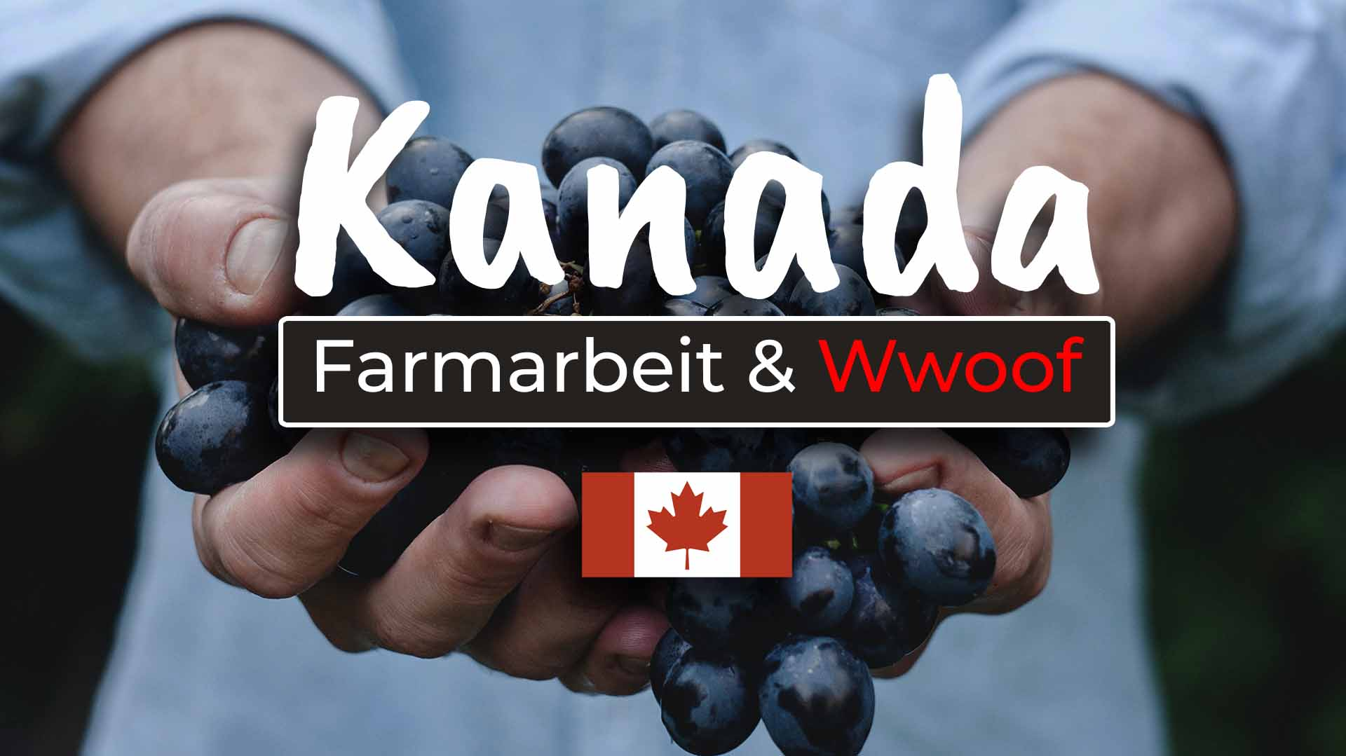 Farmarbeit in Kanada Jobmöglichkeiten, Wwoofing und Co - Cover